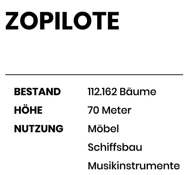 Zopilote